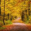 Autumn forest — Stock Photo #29932527