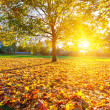 Sunny autumn foliage — Stock Photo #29932637
