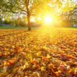Sunny autumn foliage — Stock Photo #29932659