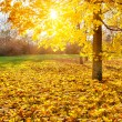 Sunny autumn foliage — Stock Photo #29932707