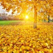Sunny autumn foliage — Stock Photo #29932747