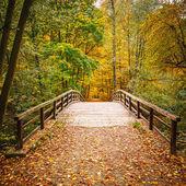 Bridge in autumn forest — Stock Photo