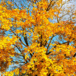 Autumn leaves over blue sky — Stock Photo