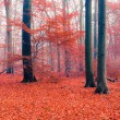 Foggy autumn forest — Stock Photo #30014797