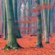 Stock Photo: Foggy autumn forest