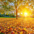 Sunny autumn foliage — Stock Photo #30855127