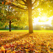 Sunny autumn foliage — Stock Photo #31100707
