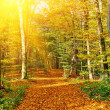 Sunny autumn forest — Stock Photo