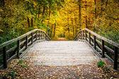 Pont en automne parc — Photo