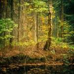 vilda skogen — Stockfoto
