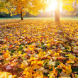 Colorful sunlighted autumn park — Stock Photo