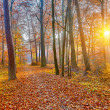 Sublighted autumn forest — Stock Photo