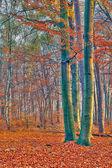 Foggy autumn forest — Stock Photo