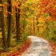 Autumn forest — Stock Photo #31594237