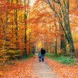 Colorful autumn park — Stock Photo #32061549
