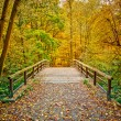 Bridge in autumn park — Stock Photo
