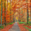 Colorful autumn park — Stock Photo