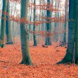 Foggy autumn forest — Stock Photo