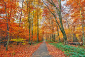 Colorful autumn park — Foto Stock