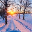 Sunset in winter park — Foto Stock