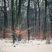 Winterwald — Stockfoto