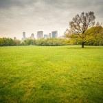 Central park at rainy day — Stock Photo #48859247