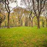 Central park at rainy day — Stock Photo #50317849