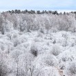Trees covered by frost. - Stock Photo