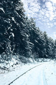Railroad in snow forest — Stock Photo