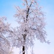 Frosty Trees at Winter morning - Stock Photo