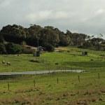 Horses at farmland panorama — Stock Photo #11501922