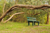 Bush in blossom and bench — Stock Photo