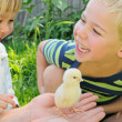 Stock Photo: Boy, girl and chicken