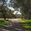 Footpath in park with shadows — Stock Photo