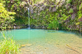 Spring fed pool on the road to Hana - Maui — Stock Photo