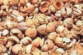 Tas de coques de noix de coco au rebut — Photo