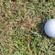 Stock Photo: Golf ball on green light rough