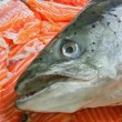 Raw Salmon Head - Stock Photo