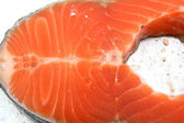 Raw Salmo Fillet — Stock Photo