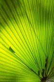 Palm Leaf Pattern — Stock Photo