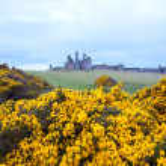 Dunstanburgh castle England — Stock Photo #18461915