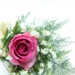 Natural pink rose corsage — Stock Photo