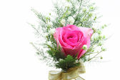 Pink rose corsage — Stock Photo