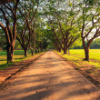 Dirt Road stretching out — Stock Photo