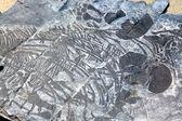 Ichthyosaurier-fossil — Stockfoto
