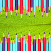 Colorful pencils frame on leaf background — Stok fotoğraf