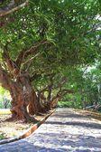 Green garden trees — Stock Photo
