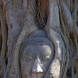 Buddha head in tree root — Stock Photo