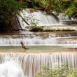 Panorama Tropial Waterfall — Stock Photo