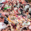 Постер, плакат: Raw Fish garbage